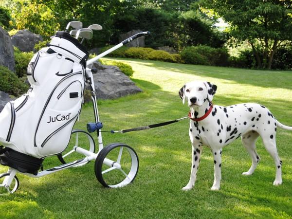 JuCad dog leash